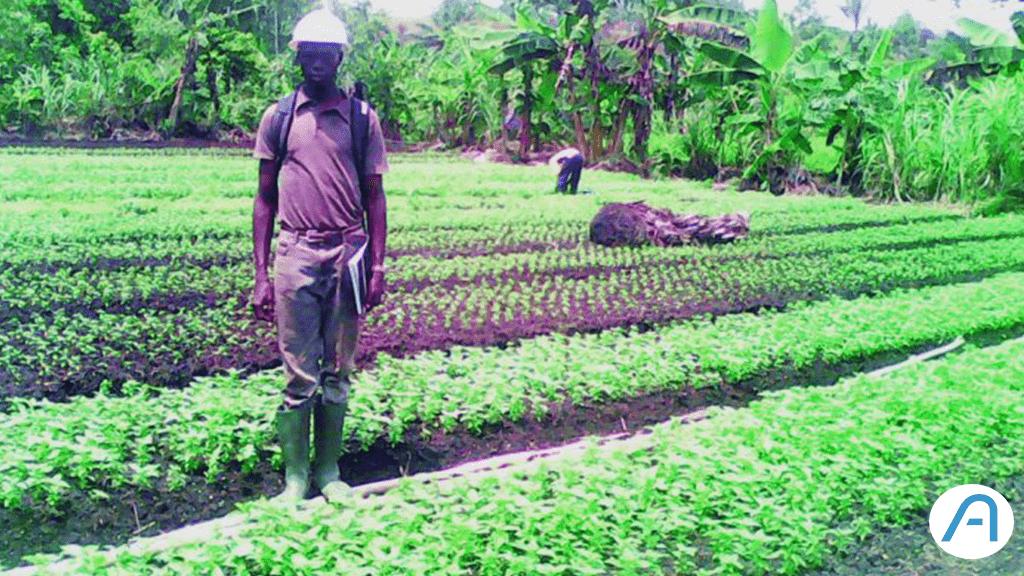 Cet entrepreneur camerounais a lancé sa plantation avec 4.000 francs CFA !