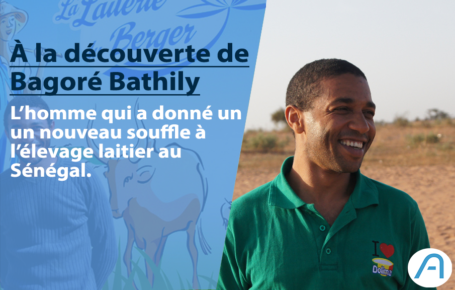 Success Story : Bagoré Bathily, l'homme qui a donné un nouveau souffle à l'élevage laitier sénégalais.